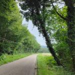 Danger route de Travers : un arbre menace de tomber sur la route