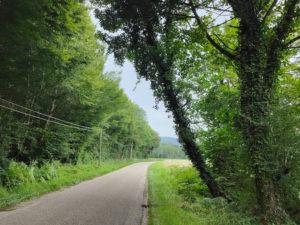 Read more about the article Danger route de Travers : un arbre menace de tomber sur la route