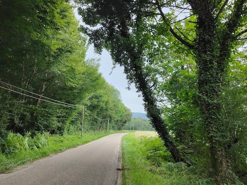 You are currently viewing Danger route de Travers : un arbre menace de tomber sur la route