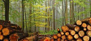 Read more about the article Les inscriptions pour les coupes de bois sont ouvertes !